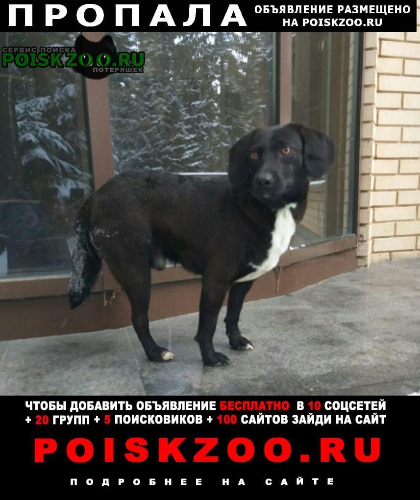 Красноборск Пропала собака трёхлапый пёс.