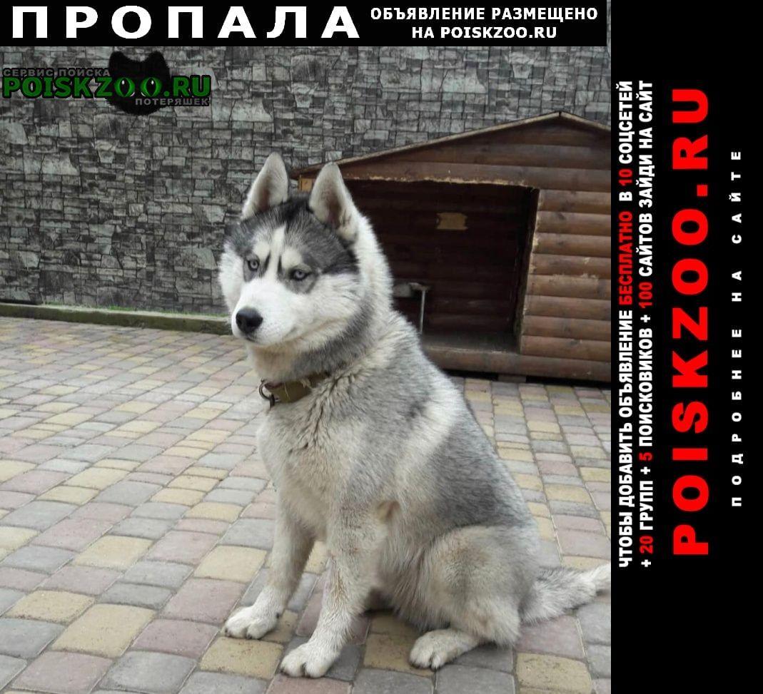 Пропала собака хаски арнольд Ставрополь