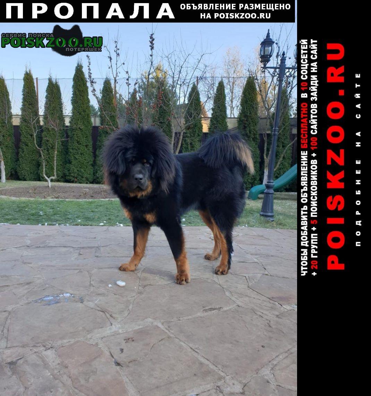 Пропала собака помогите вернуть питомца Одинцово