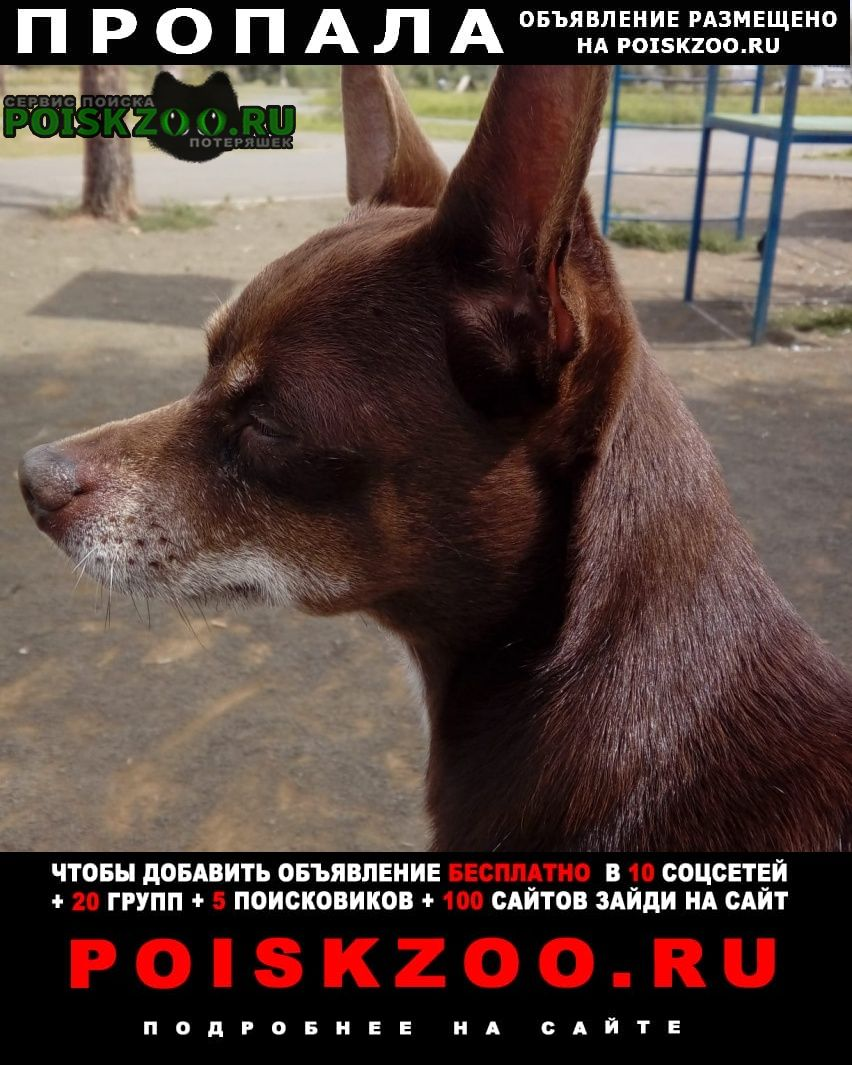 Пропала собака Братск
