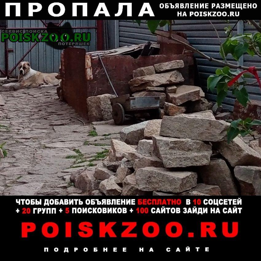 Пропала собака Челябинск