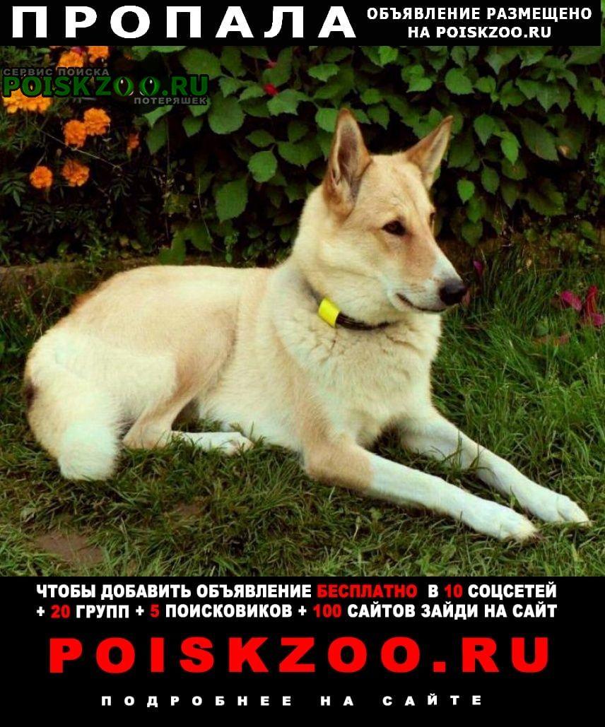 Истра Пропала собака потерялась лайка зсл