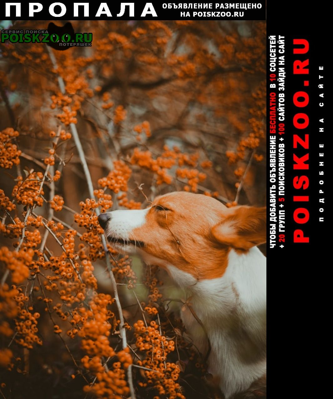 Пропала собака test Москва