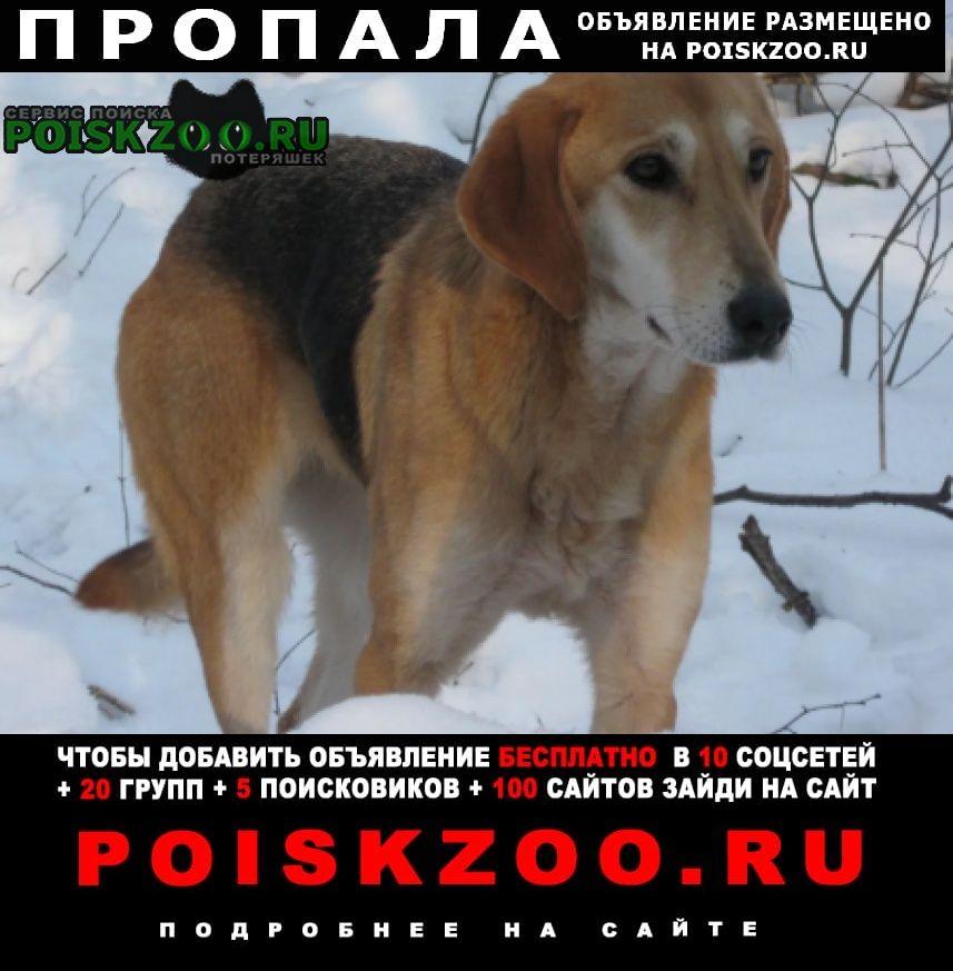 Пропала собака русская гончая Раевский