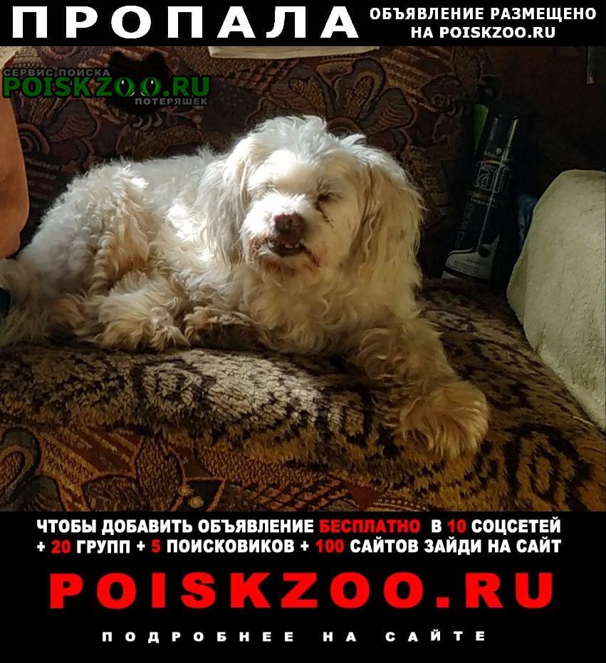 Пропала собака кобель маленькая белая собака Москва