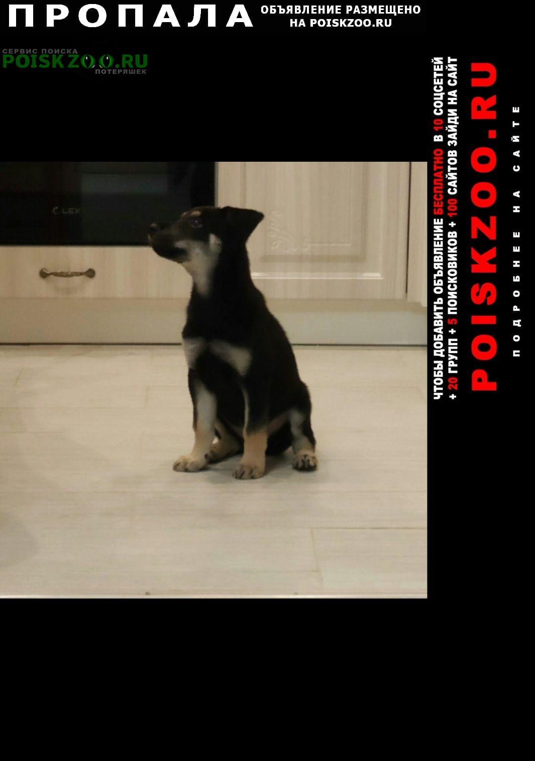 Москва Пропала собака немецкий ягдтерьер, щенок 4 мес