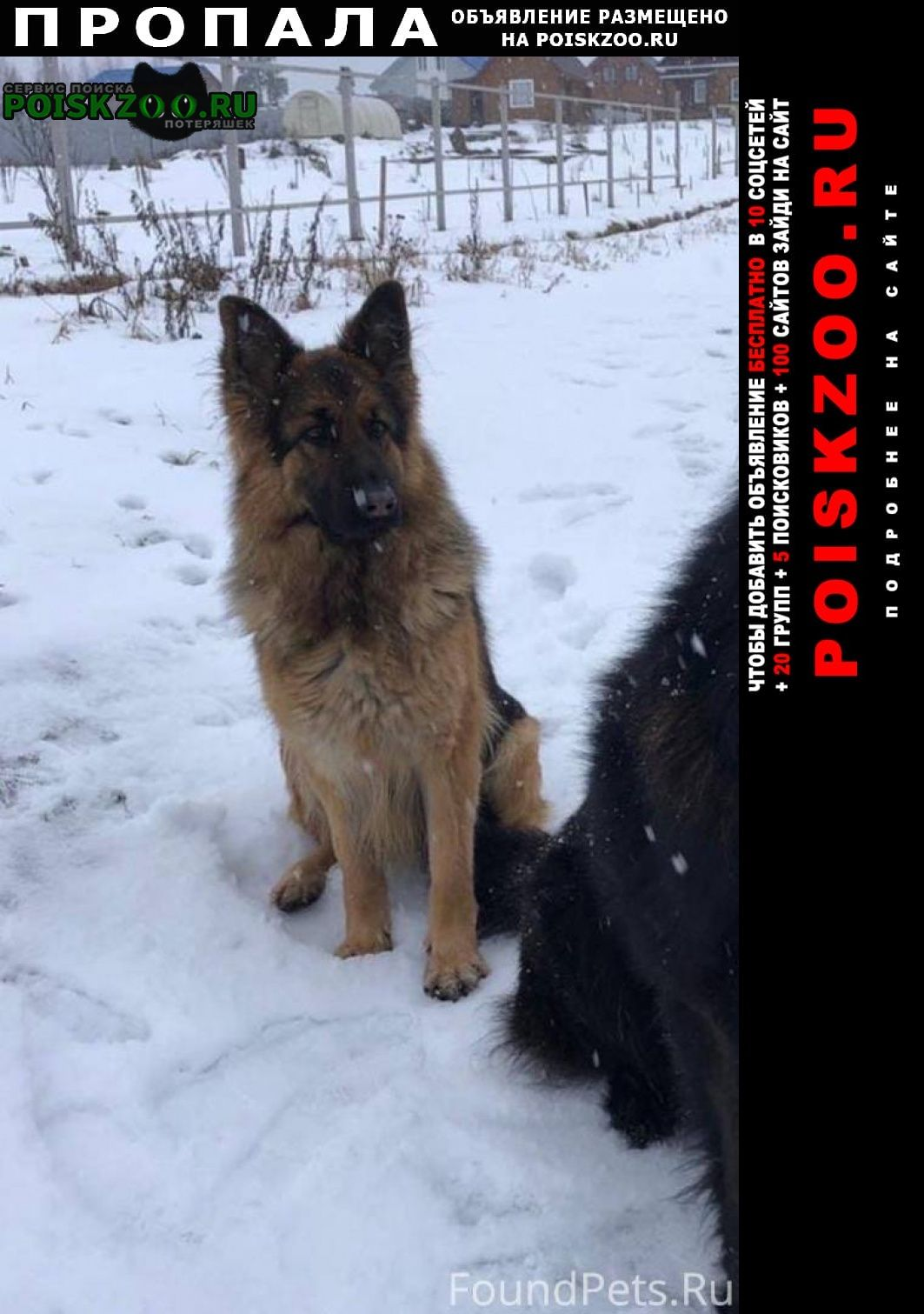 Пропала собака срочно   Вологда