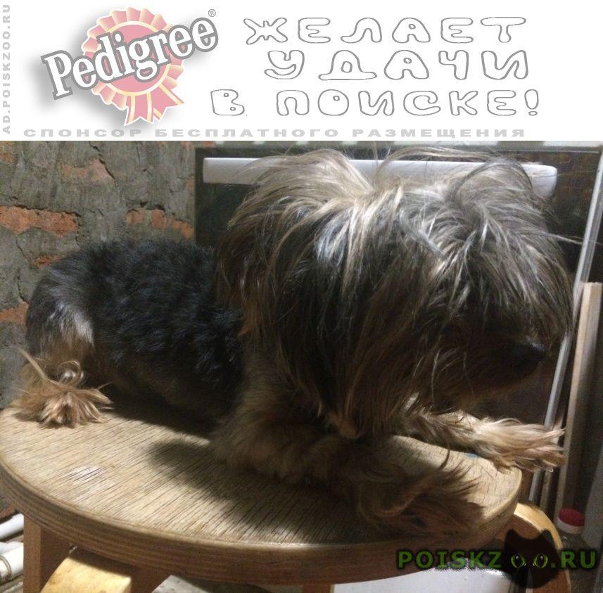 Пропала собака кобель в поселке яблоновский г.Адыгейск