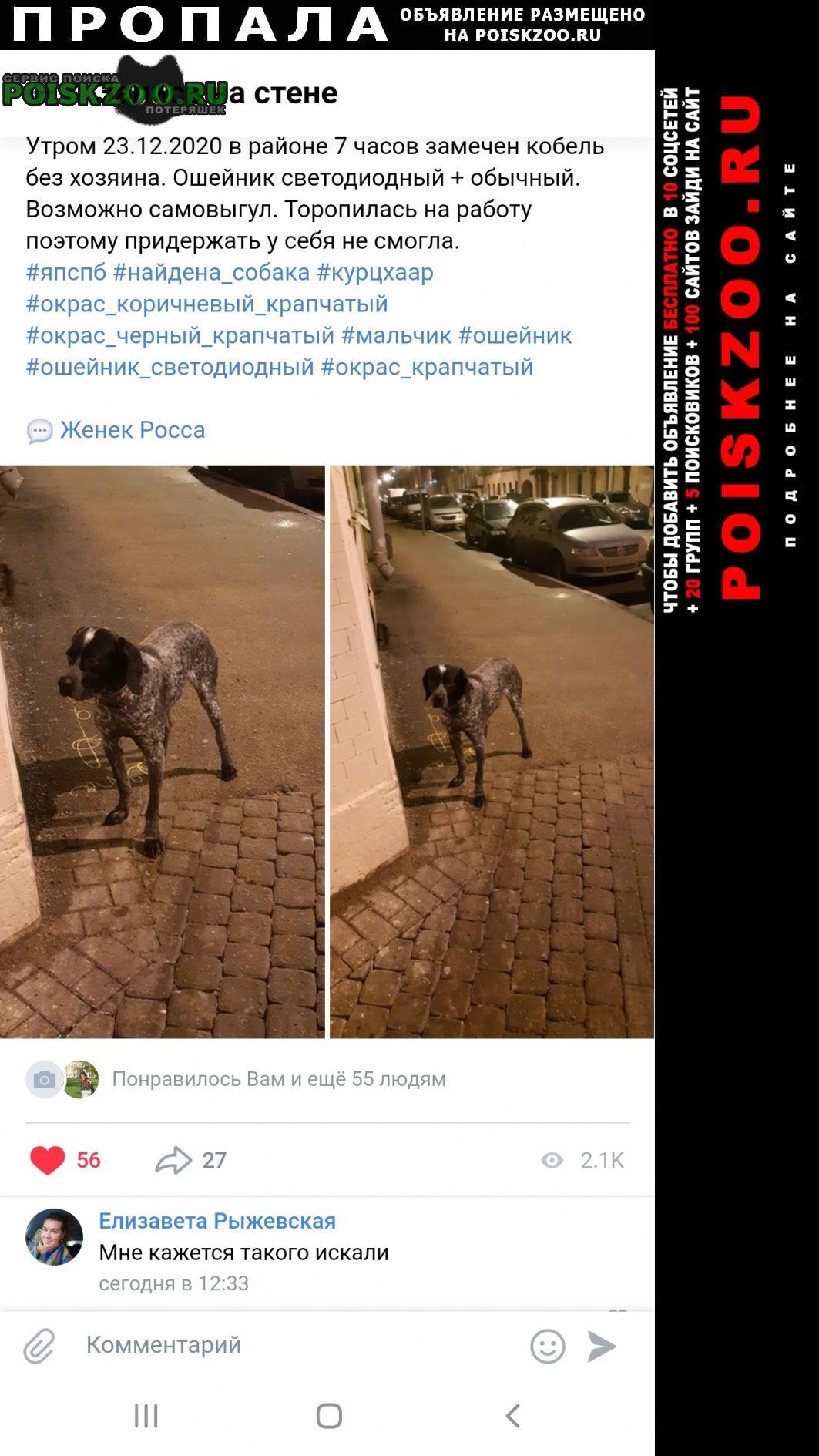 Пропала собака 22 декабря 2020 Санкт-Петербург