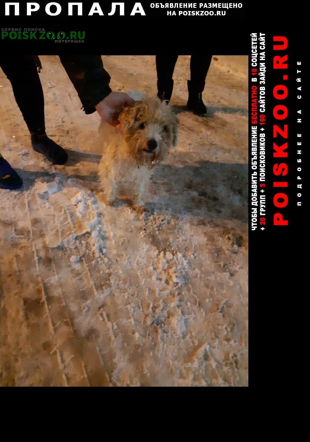 Пропала собака Мурманск