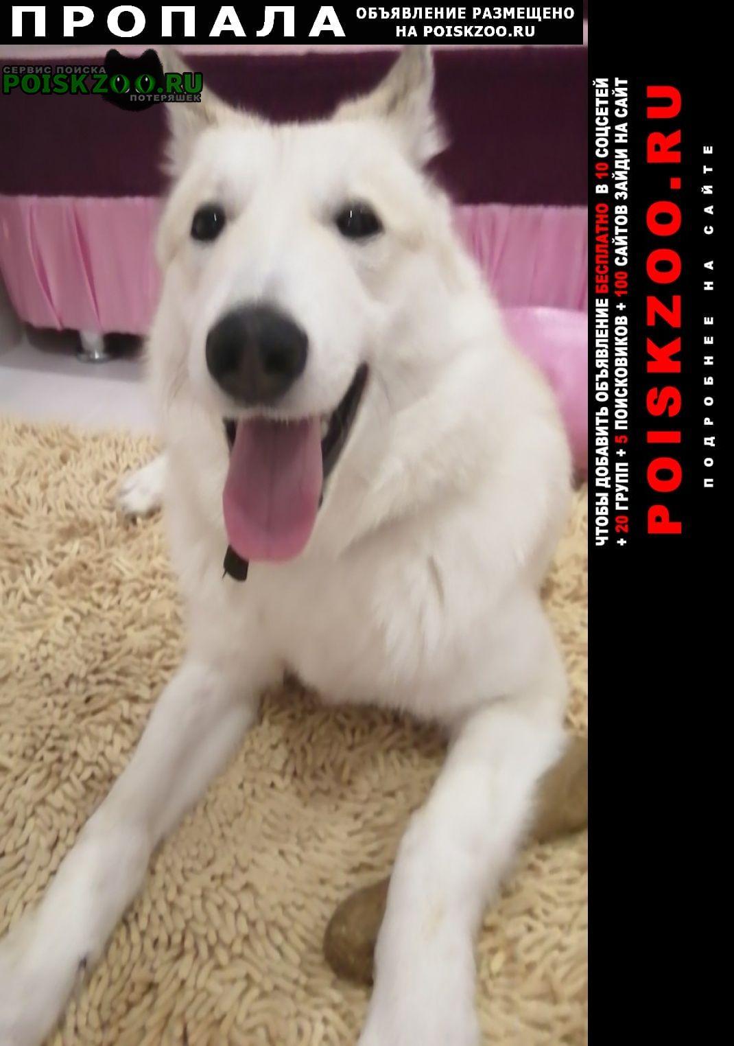 Пропала собака лайка Ноябрьск