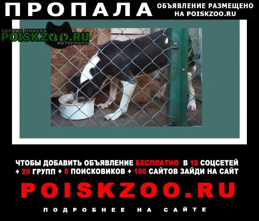 Пропала собака пёс Ставрополь