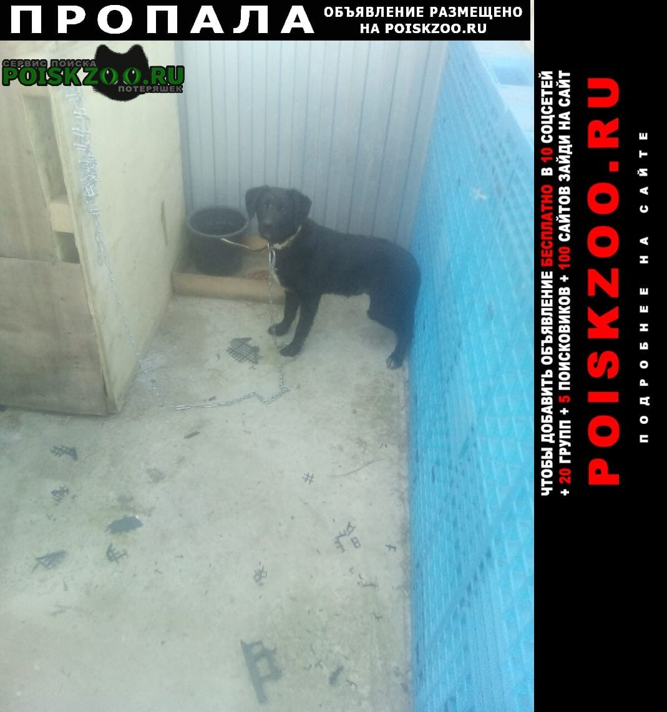 Пропала собака в поселке южный   Краснодар