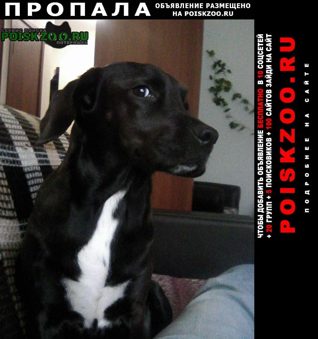 Пропала собака Ломоносов