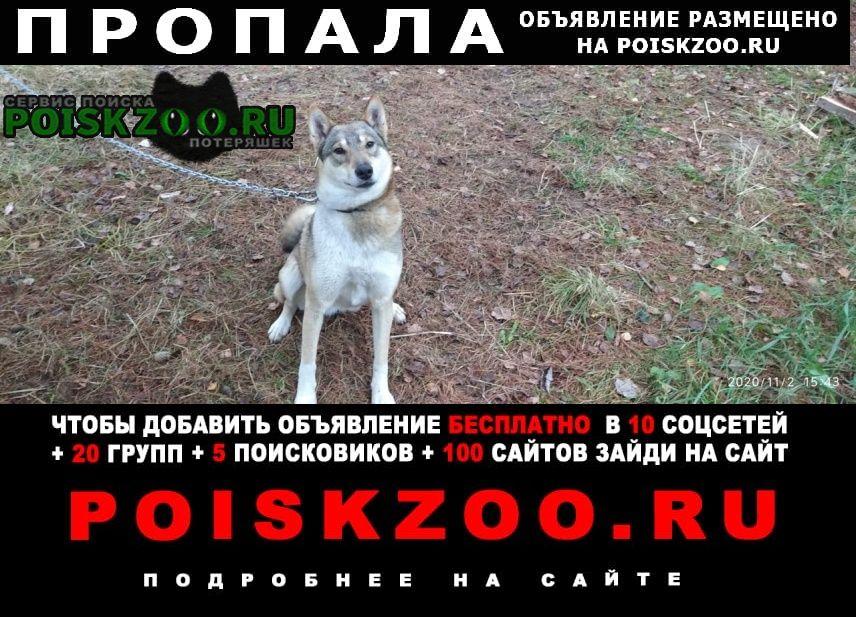 Пропала собака Черкесск Карачаево-Черкесская Республика