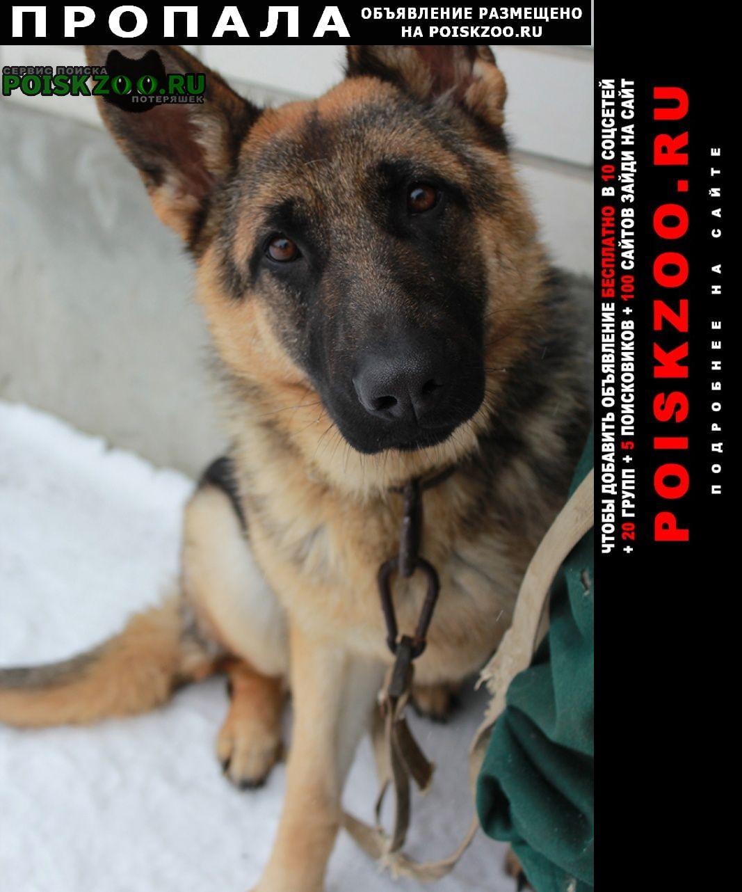 Пропала собака Калининск