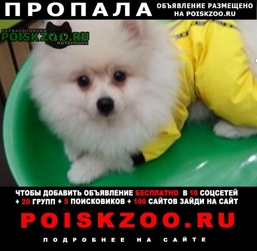 Пропала собака белый померанский шпиц Москва