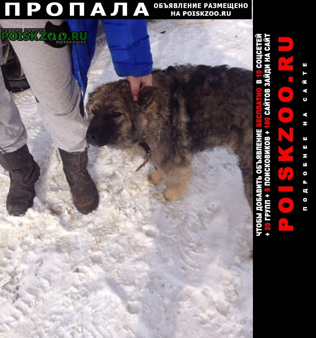 Пропала собака Агеево