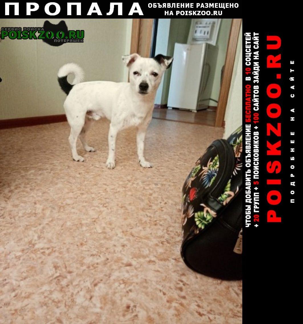 Пропала собака Набережные Челны