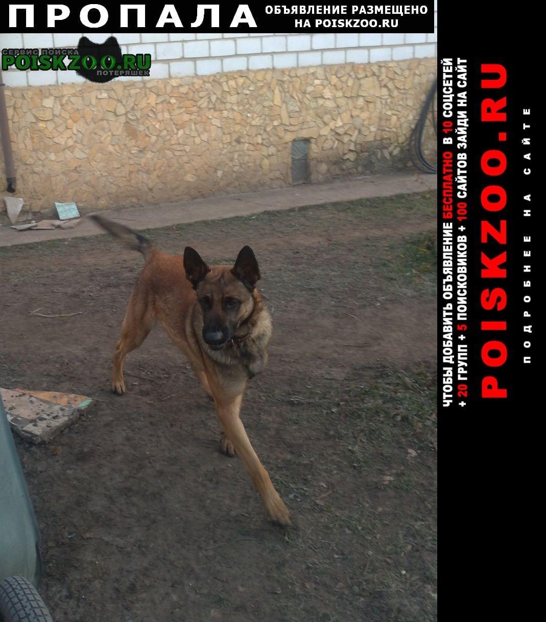 Пропала собака помогите найти  Знаменское (Орловская обл.)
