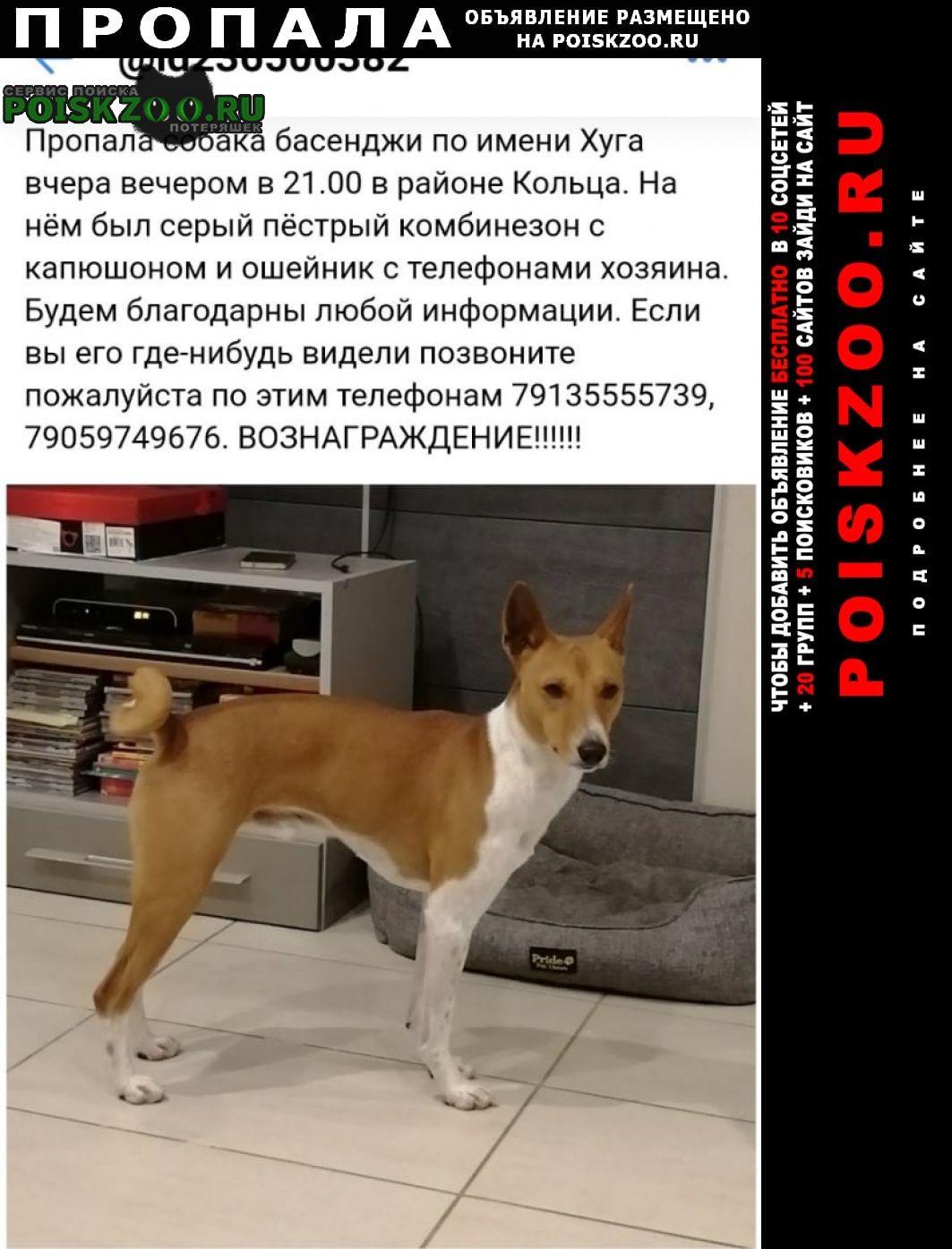 Пропала собака Железногорск