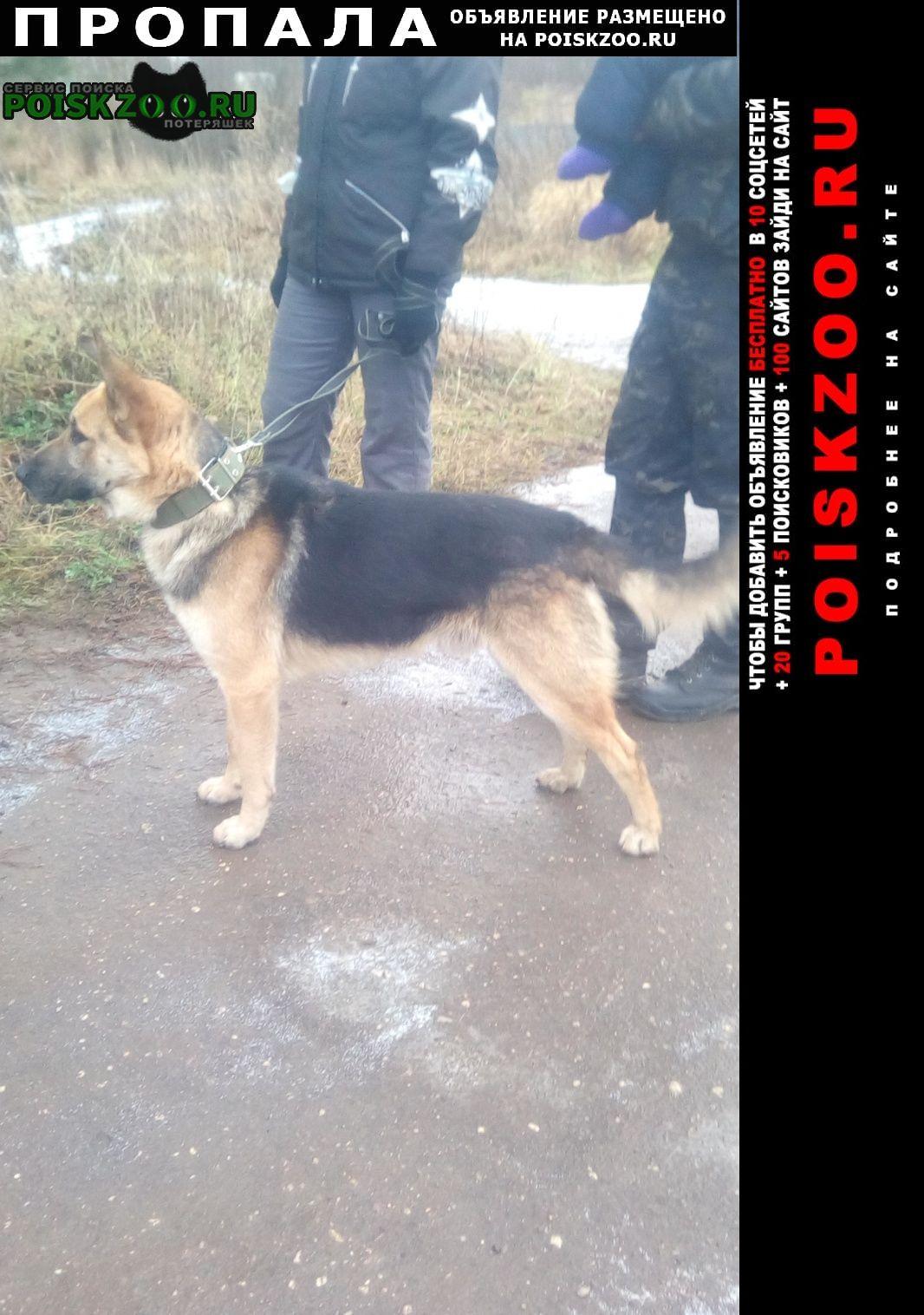 Пропала собака пёс близкий метис немецкой овчарки Кадников