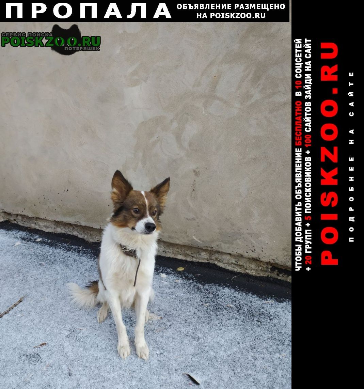 Пропала собака по кличке спот Самара
