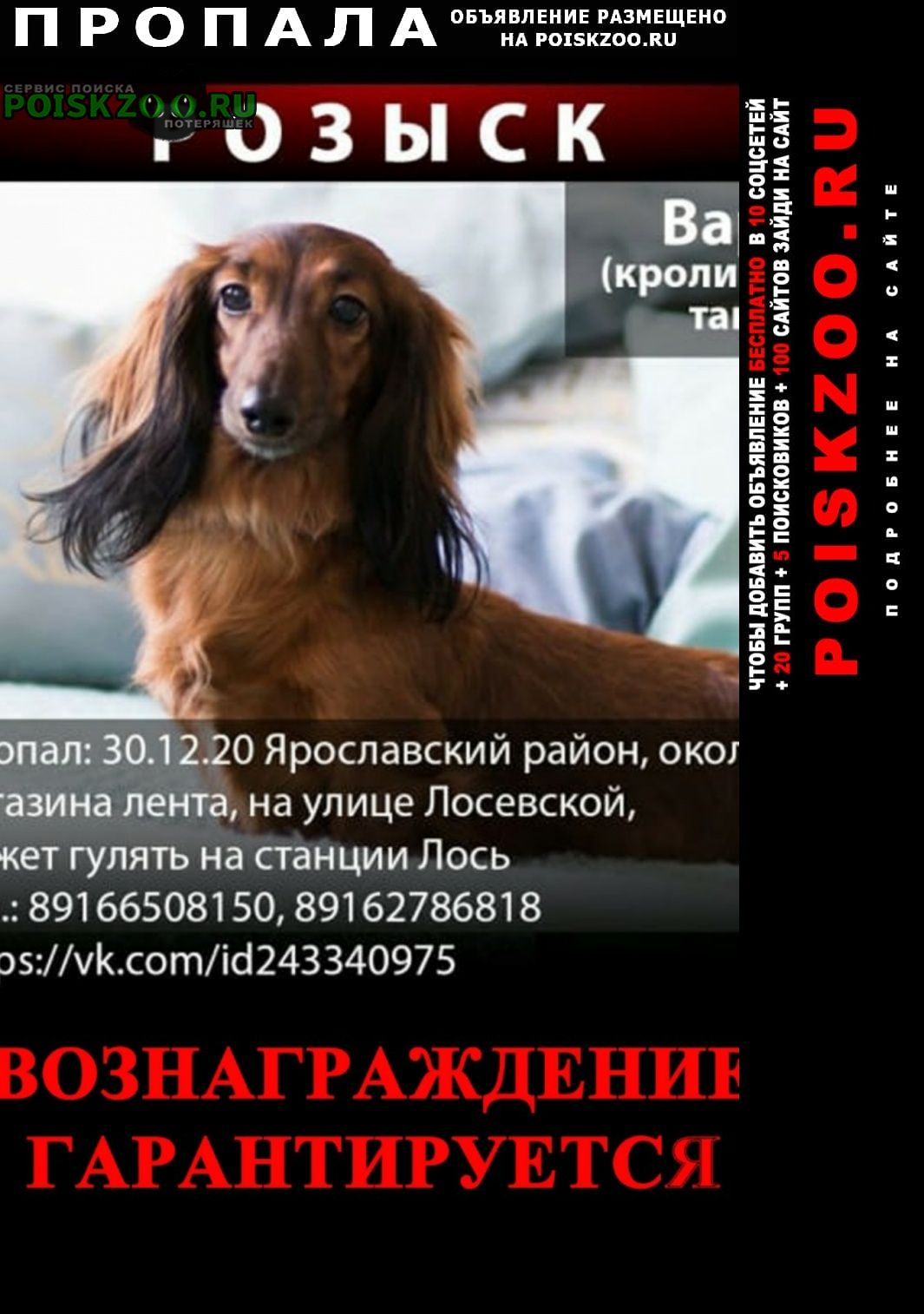 Пропала собака наш ребенок Москва