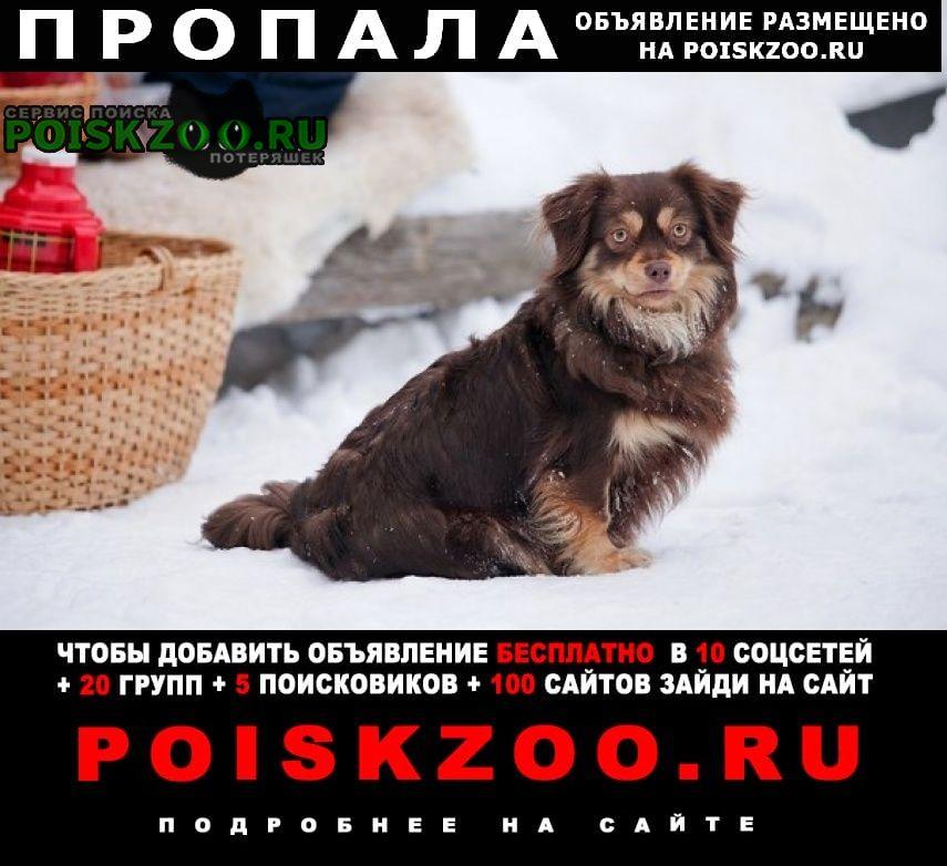 Пропала собака Урмары