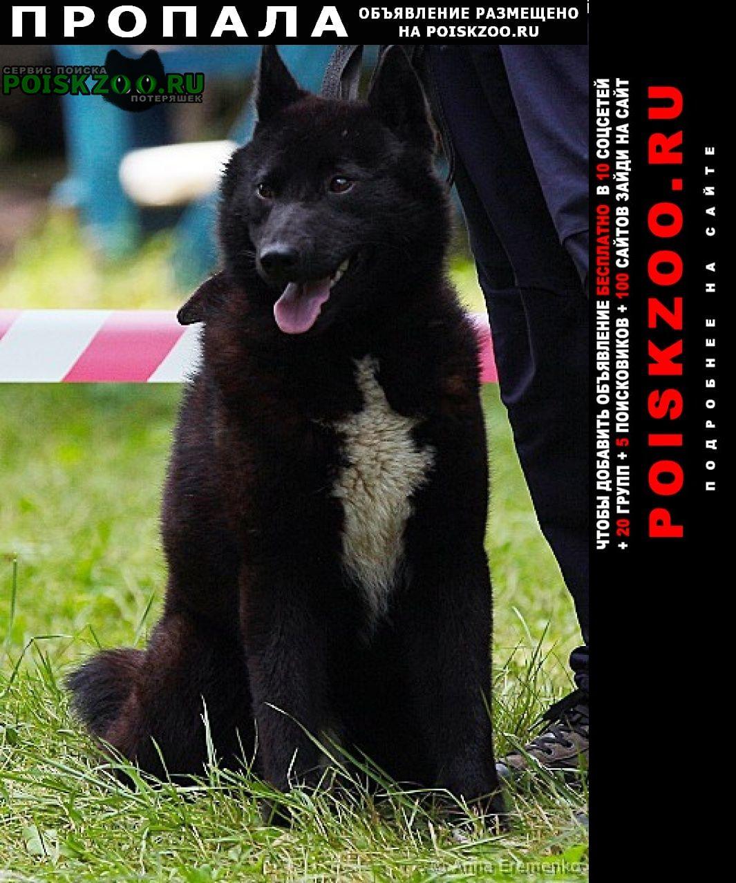 Пропала собака Вологда