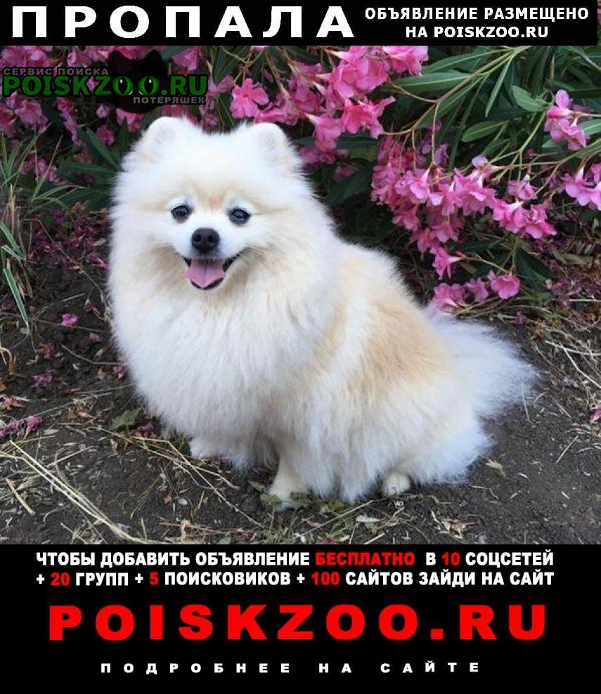 Пропала собака член-семьи Москва