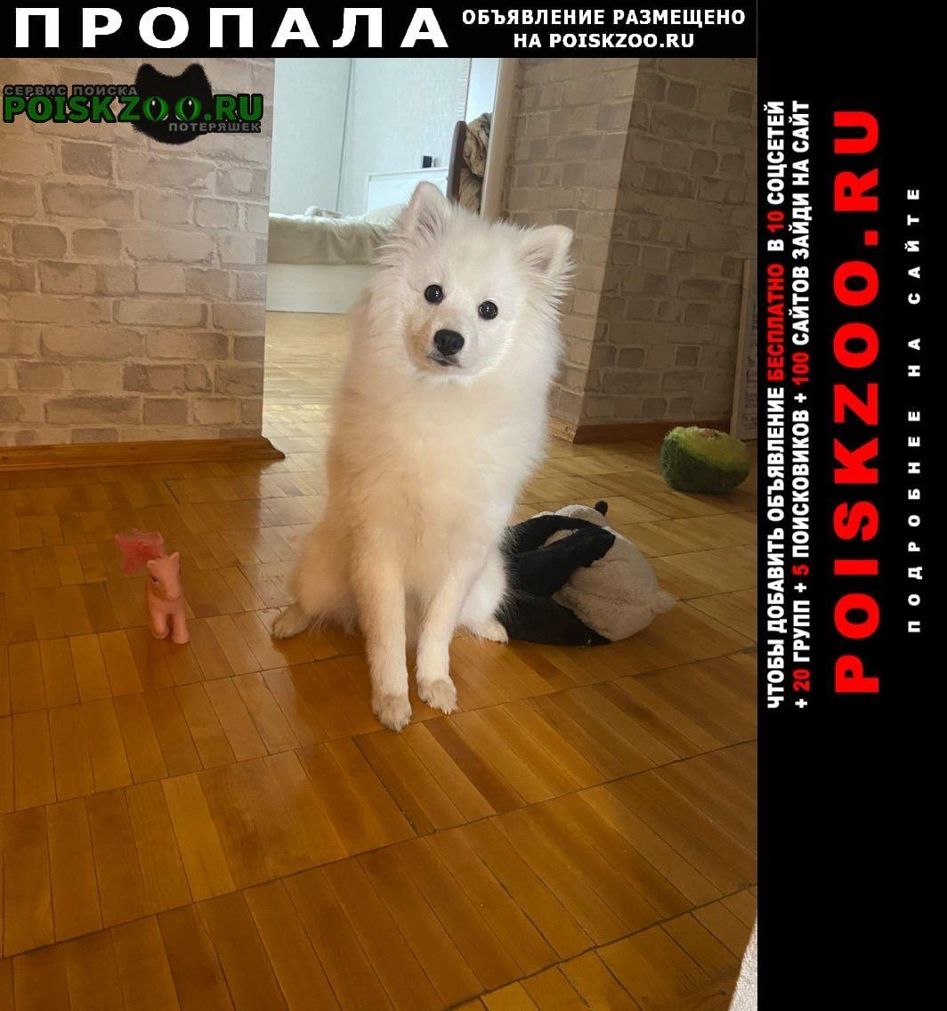 Пропала собака Екатеринбург
