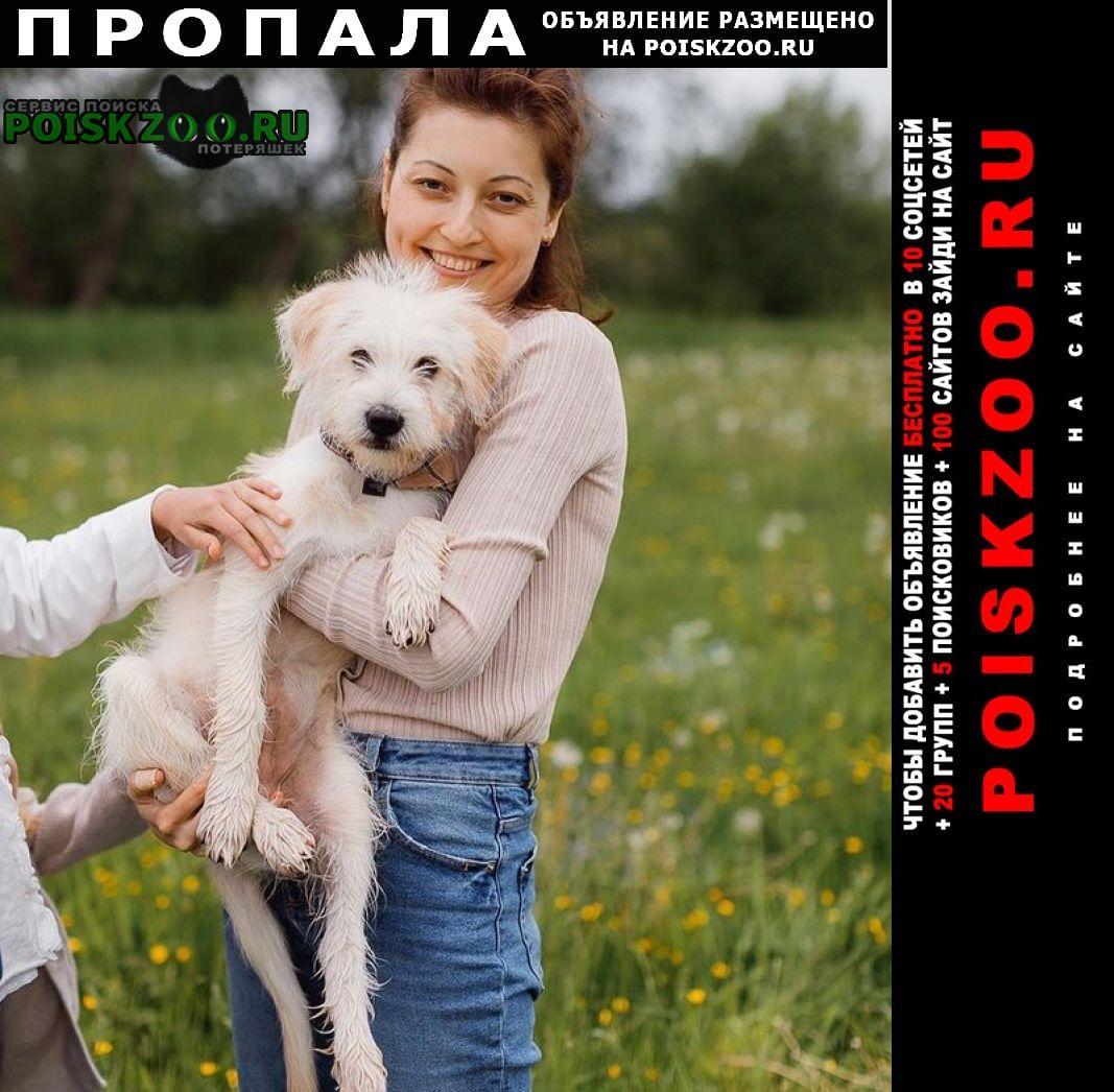 Пропала собака Гатчина