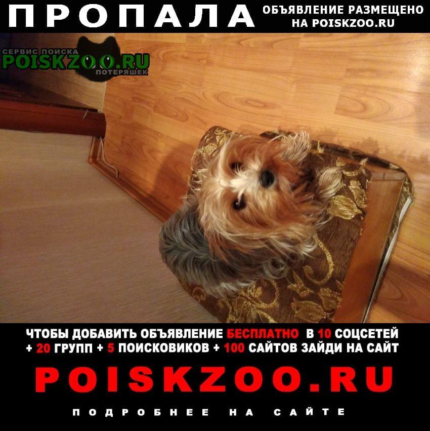 Уфа Пропала собака кличка дженни