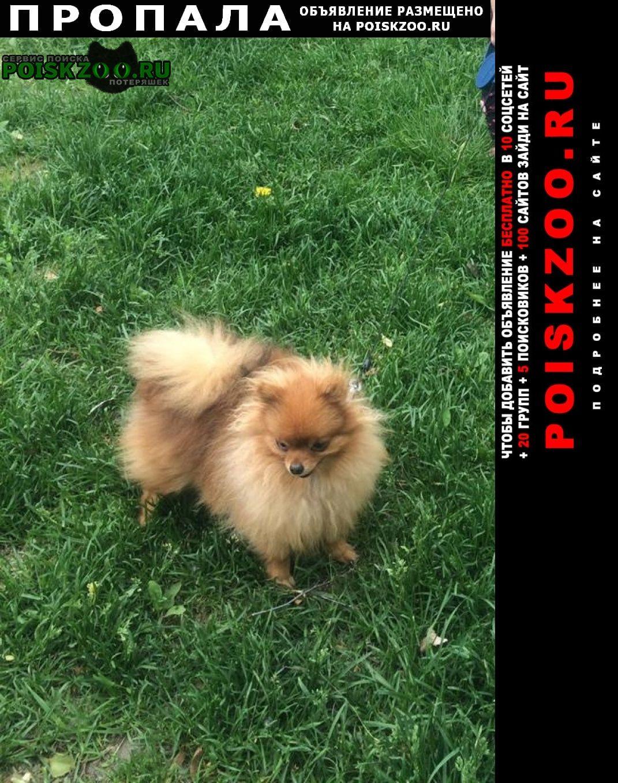 Пропала собака помогите найти Томск