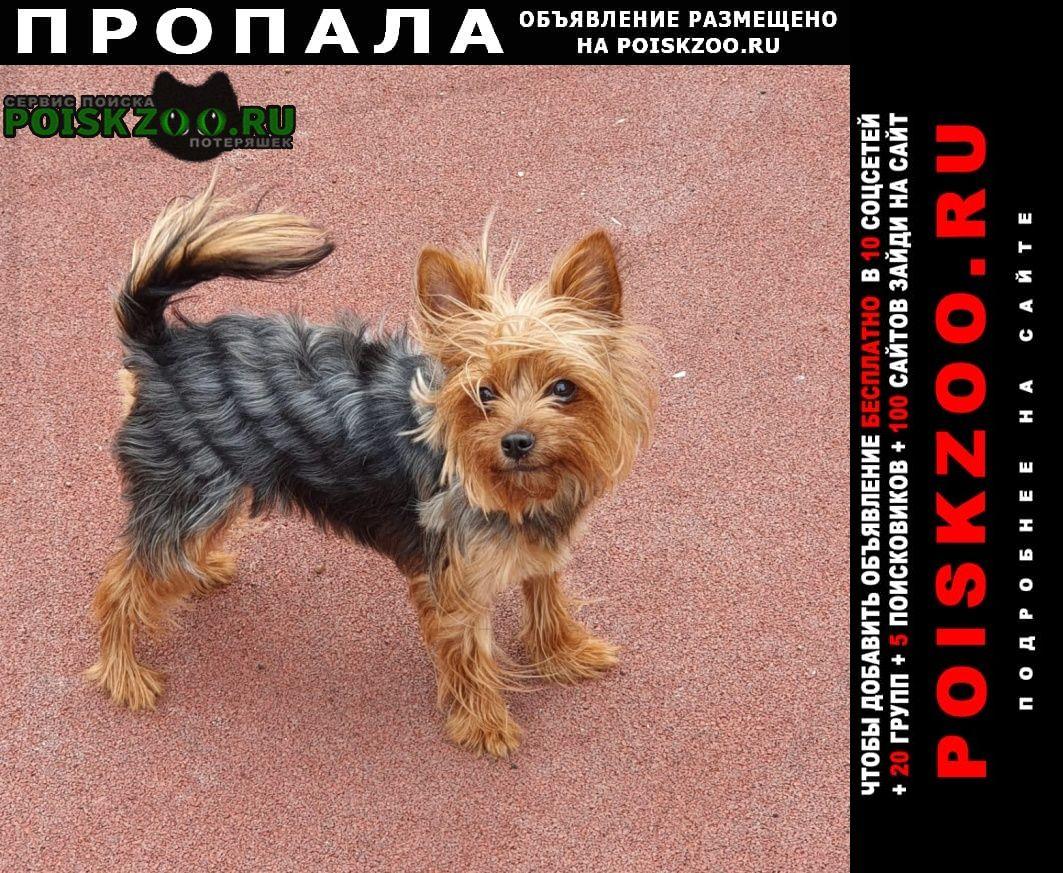 Уфа Пропала собака мини терьер