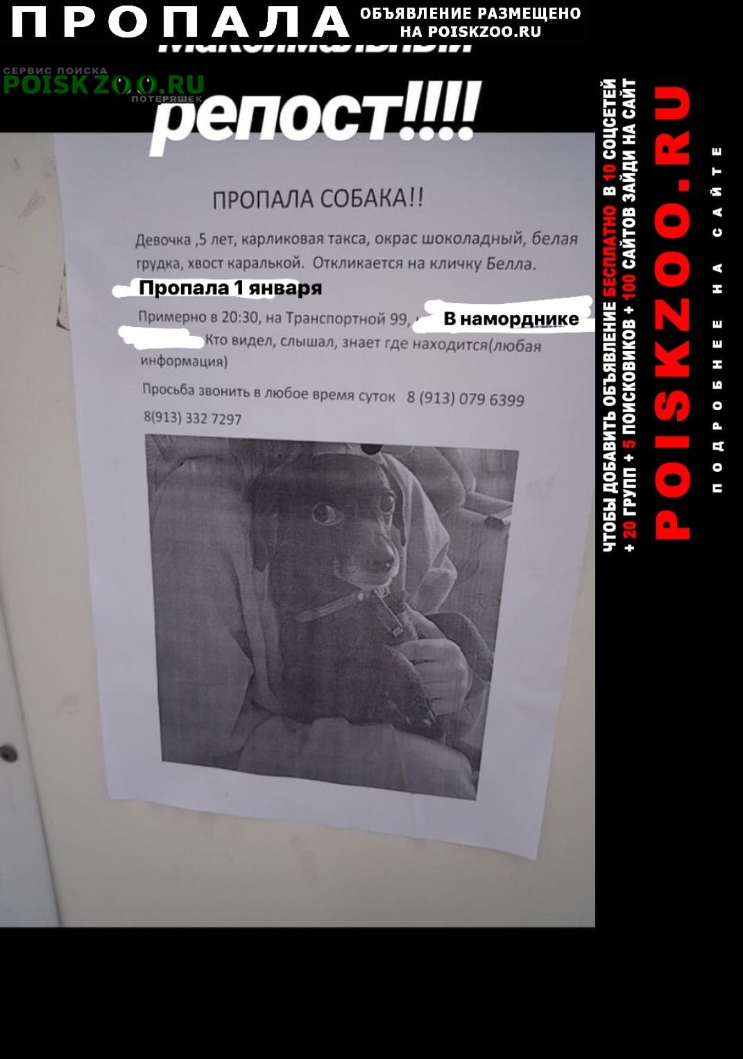 Новокузнецк Пропала собака 1 числа, в наморднике