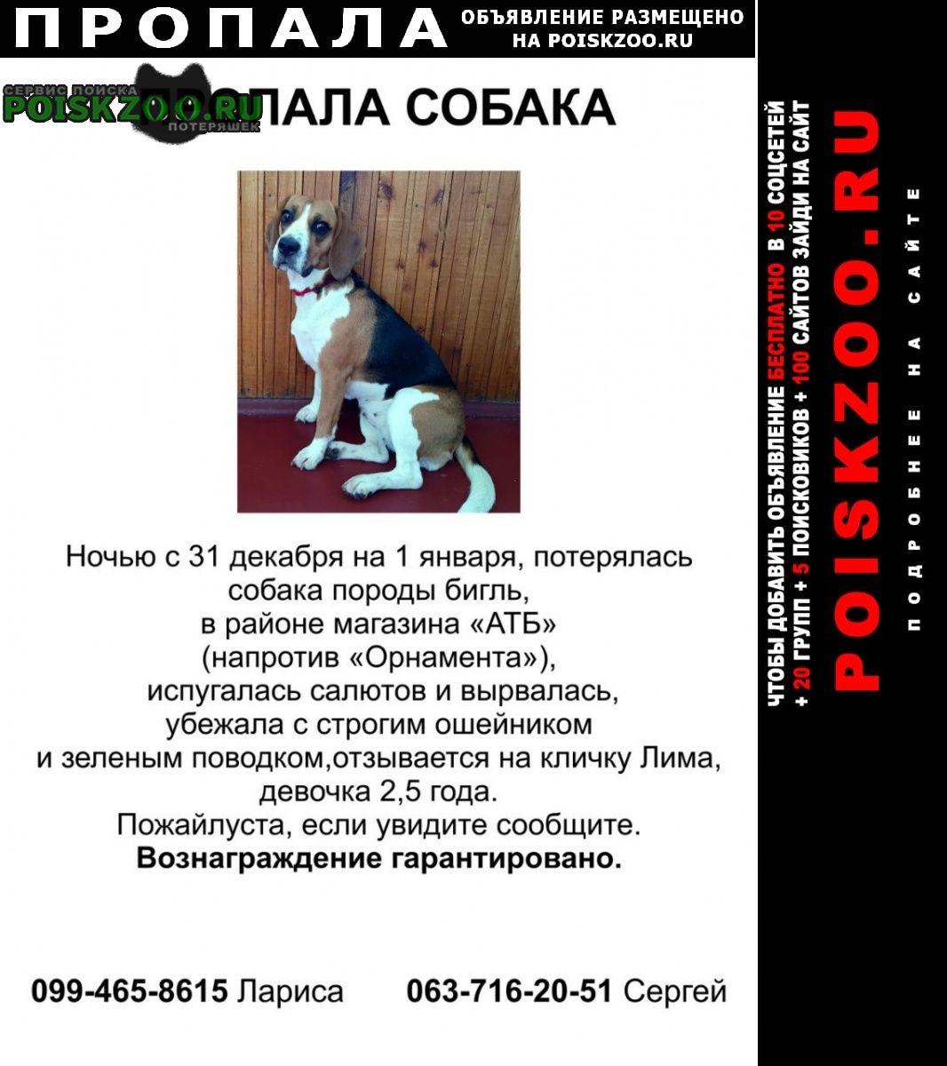 Пропала собака Киев