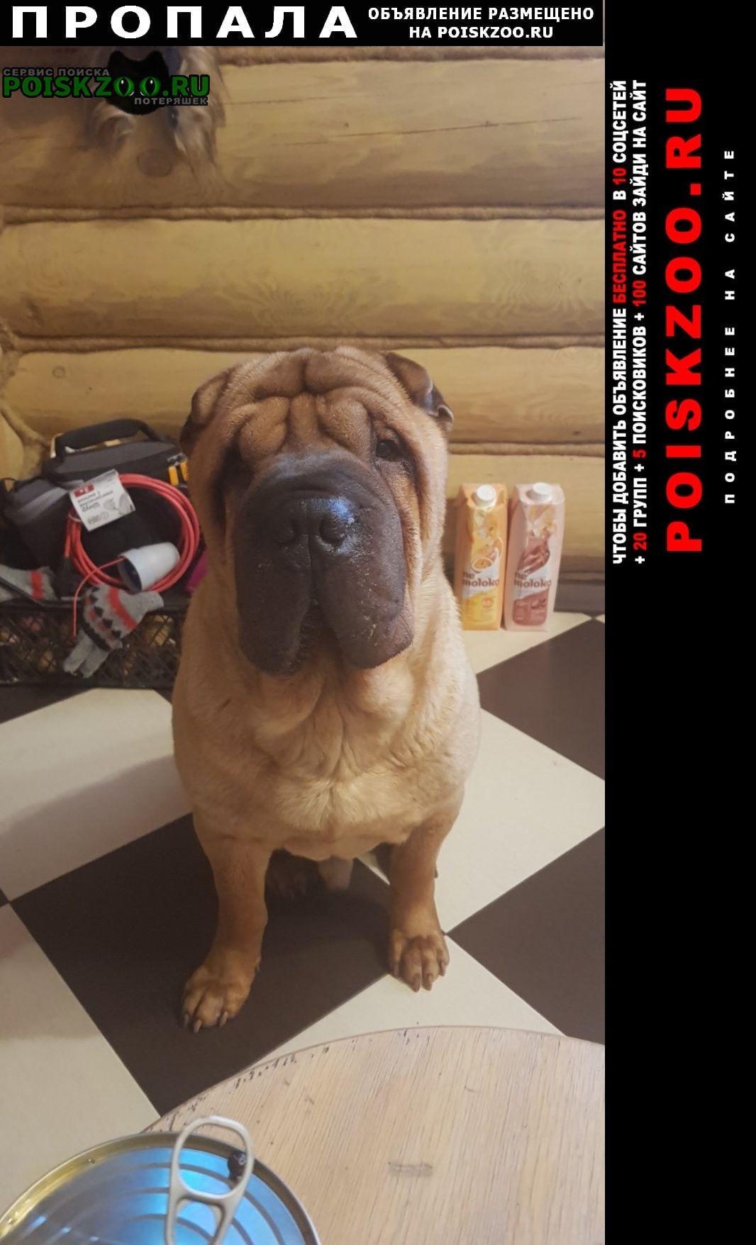 Пропала собака Ветлуга