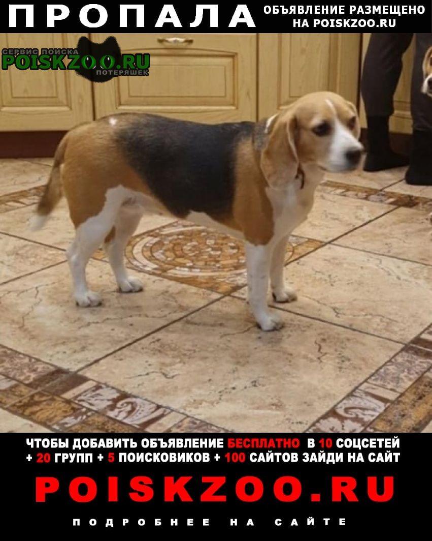 Пропала собака помогите найти Красноярск