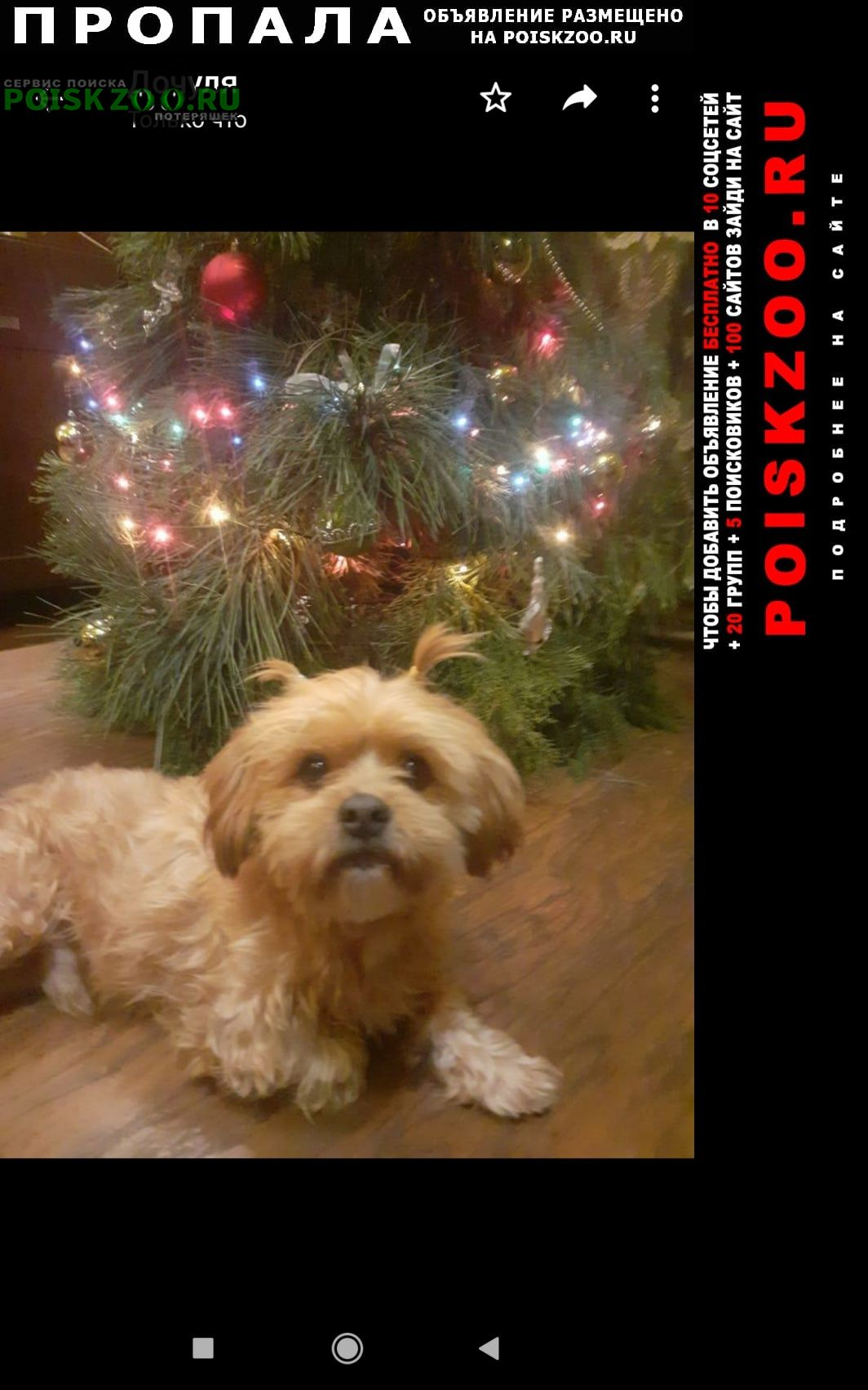 Пропала собака Шахты