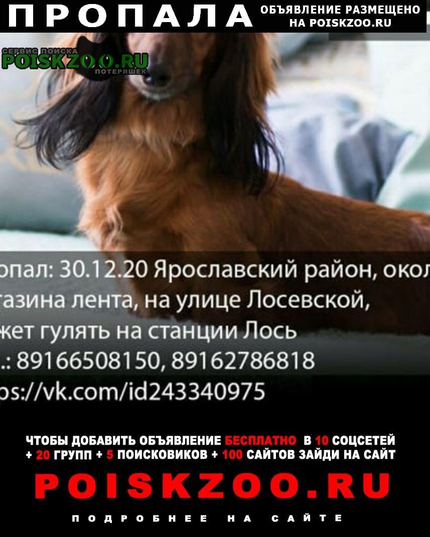 Москва Пропала собака наша варенька
