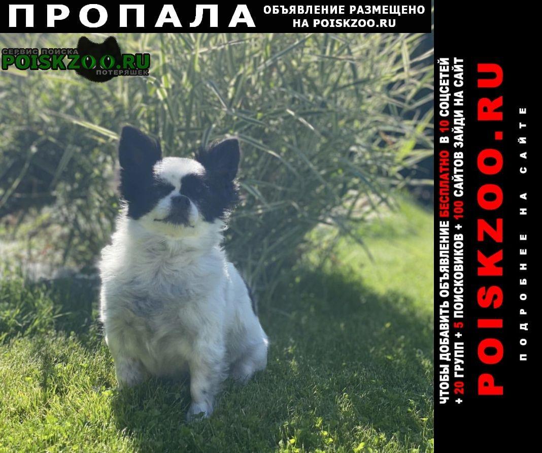 Пропала собака вознаграждение 5000 Чехов