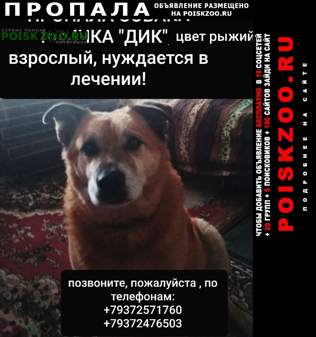 Саратов Пропала собака его очень ждут и любят дома.