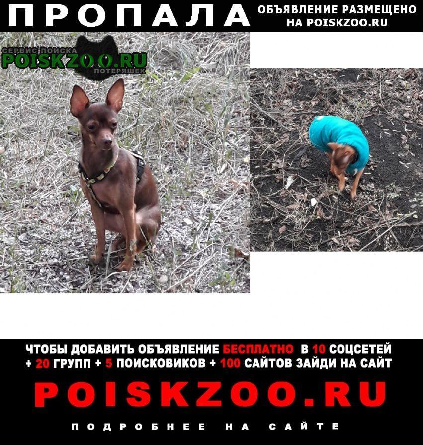 Пропала собака маленькая собачка Самара