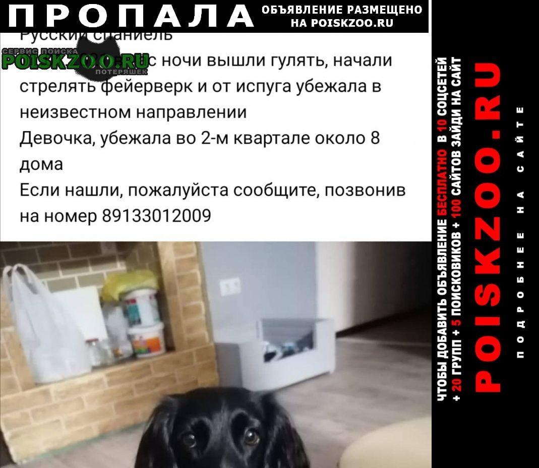 Кемерово Пропала собака, район ягуновский