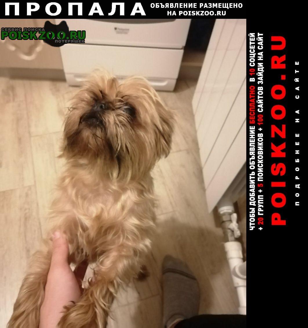 Пропала собака Краснодар