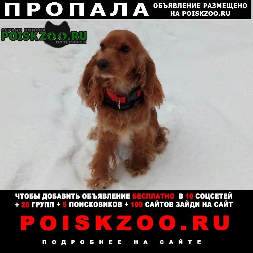 Пропала собака помогите найти пожалуйста  Бор