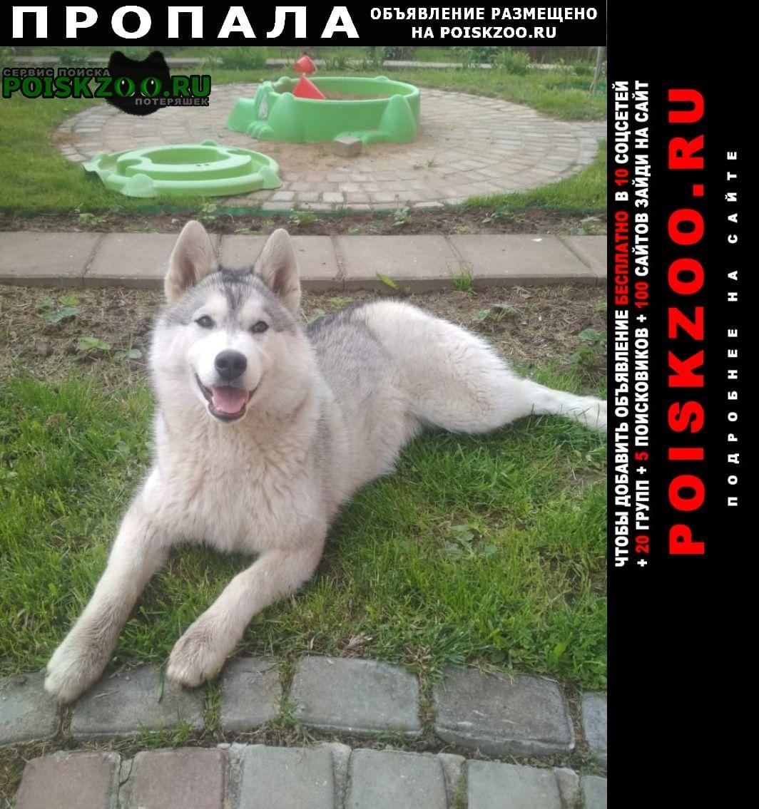 Пропала собака хаски Троицк