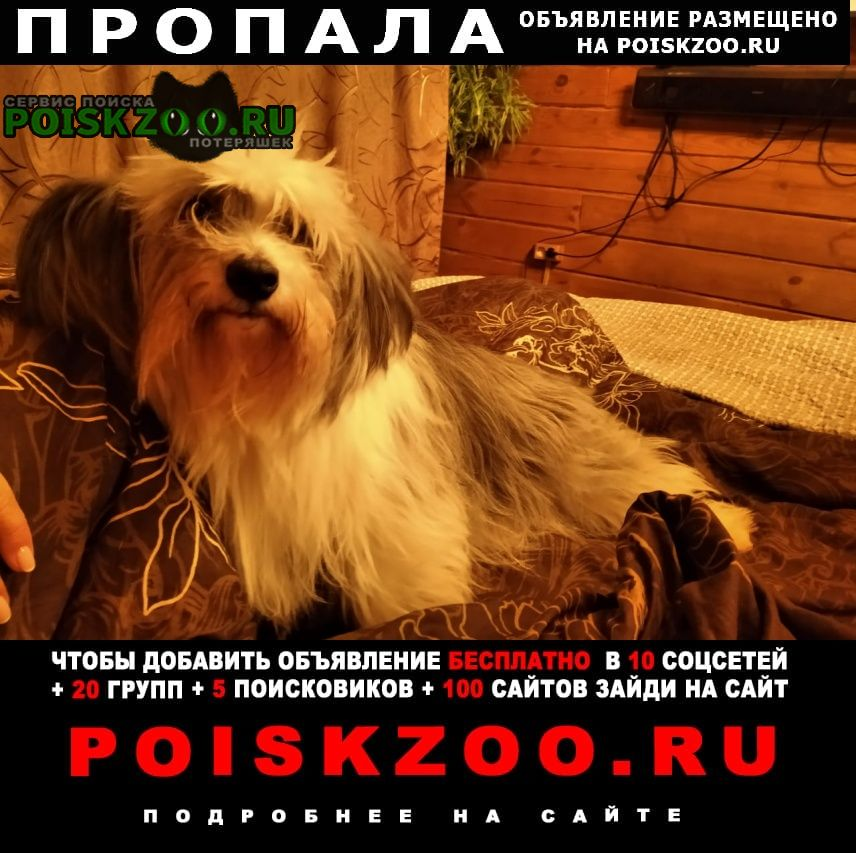 Кстово Пропала собака помогите вернуть тинки домой